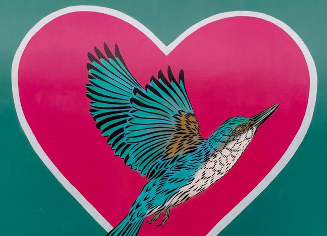 A teal hummingbird in a pink heart against a teal background, photo by Andrew Lane